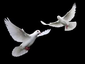 Doves-doves-31209074-1024-768